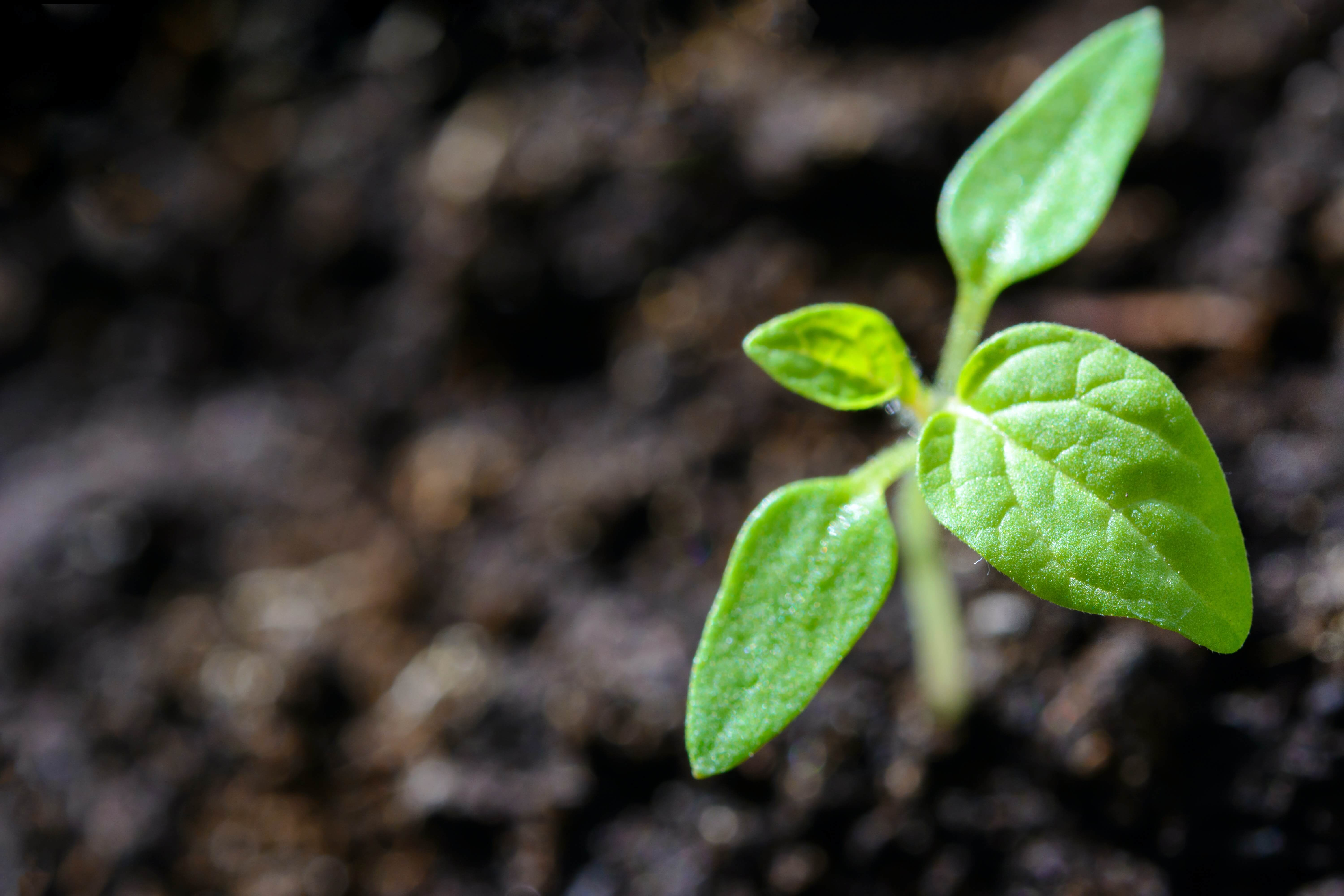 Finding New Growth Opportunities With Competitive Intelligence